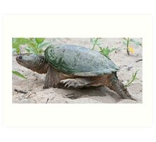 Egg Burier - Snapping Turtle Art Print