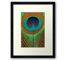 Animal - Bird - Peacock Feather Framed Print