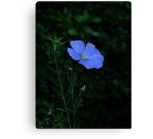 Violets are Blue Canvas Print
