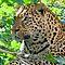 Safari or Zoofari