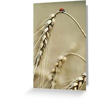 Ladybird on the top of Grain Greeting Card