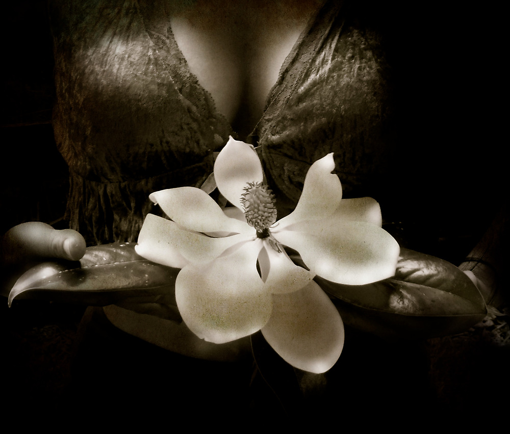 Magnolia by KatarinaSilva