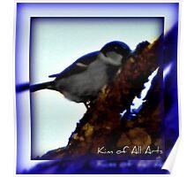 Blue Bird Aura (Bordered)  Poster