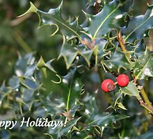 Happy Holly-days by JoAndCoCards