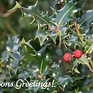 Seasons Greetings (Holly) by JoAndCoCards
