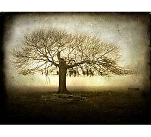 Tree of Life Photographic Print