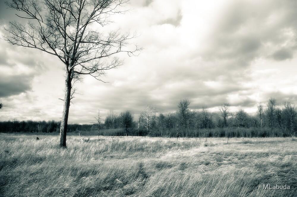 Irwin Prairie Oak Tree and Meadow by MLabuda