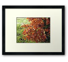 Autumn Leaves and Frosted Field in Essex Framed Print