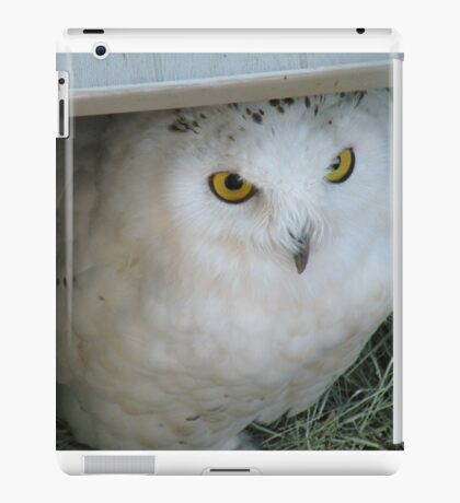 Snowy Owl in Shelter iPad Case/Skin