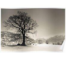 Langdale Tree Poster