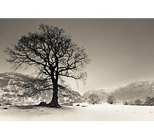 Langdale Tree Photographic Print