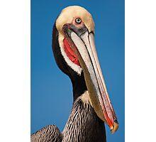 Pelican Portrait Photographic Print
