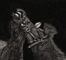 Horse Play by Pat Abbott