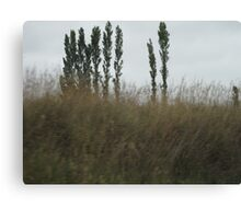 Asparagus Trees Canvas Print