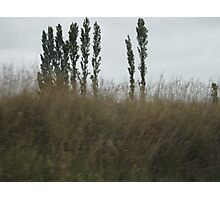 Asparagus Trees Photographic Print