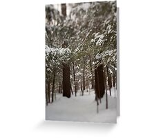 Gatineau Park, Quebec, Canada Greeting Card