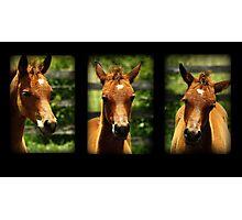 Arabian Foal Photographic Print