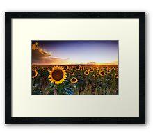 The Golden Sea Framed Print