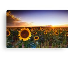The Golden Sea Canvas Print