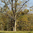 Walmart Tree by WildestArt