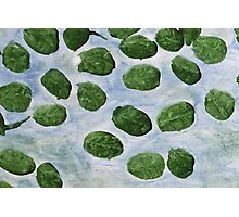 Impression Lilly Pads Photographic Print
