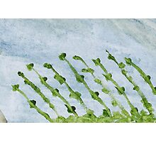 Impression Shore Seaweeds Photographic Print
