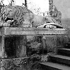the slumbering lion by kchamula