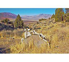 Bone Art Photographic Print
