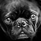 Pugface by John Attebury