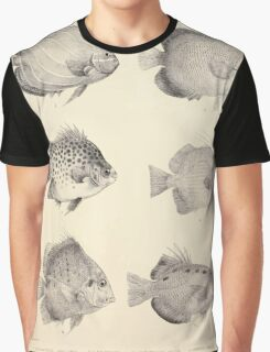 The fishes of India by Francis Day 027 - Holacanthus Annularis, H Xanthurus, Scatophagus Argus, Ephippus Orbis, Drepane Punctata, Toxotes Chatareus Graphic T-Shirt