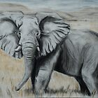 Tinted charcoal African Elephant by gogston