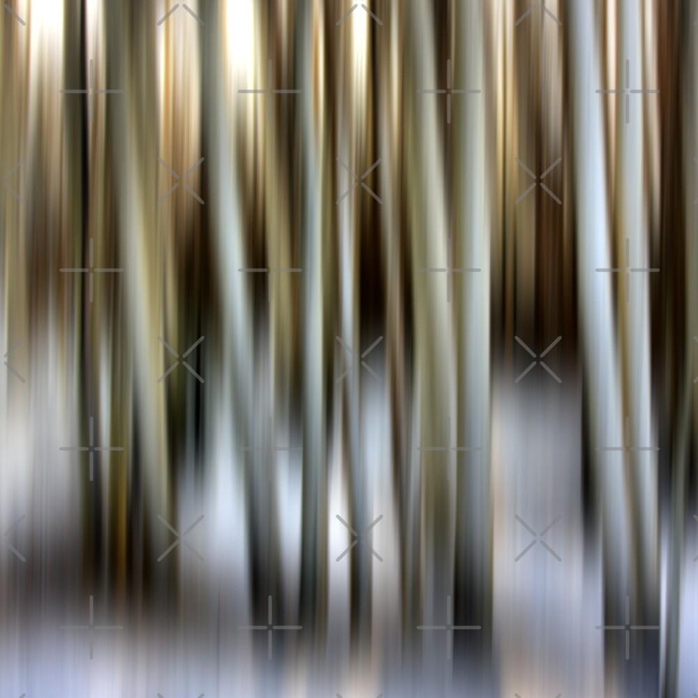 Winter Birch by Varinia   - Globalphotos