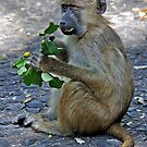 MONKEY BUSINESS by Raoul Madden