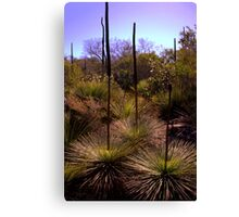 North Head Manly - Grass Tree Canvas Print