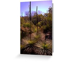 North Head Manly - Grass Tree Greeting Card