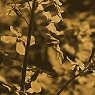Flowers in a sepia view by jammingene