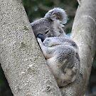 Koala Sleeping by trekarts