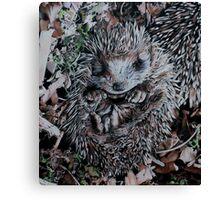 Hedgehog Sleeping Canvas Print