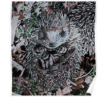 Hedgehog Sleeping Poster