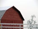 Stable On Ice by Carolyn  Fletcher