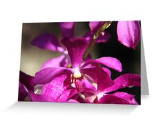 Singapore Orchid Greeting Card