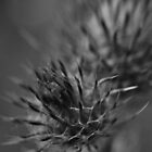 THE ONLY BEAUTIFUL THING ABOUT THISTLES by Tamara Bush