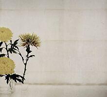 Chrysanthemums by Jenifer Wallis
