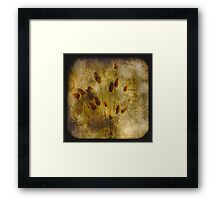 Cottontail TTV Framed Print