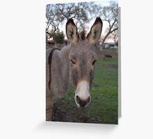 Donkey business Greeting Card