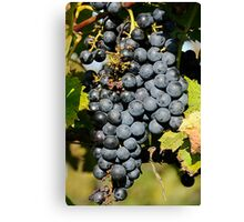 Cabernet Grapes on the Vine Canvas Print