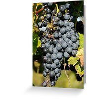 Cabernet Grapes on the Vine Greeting Card