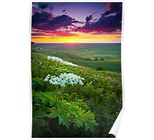 Palouse Flowers Poster