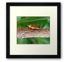 BARKING UP THE WRONG TREE Framed Print