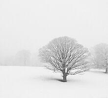 Snow on Winter Oaks by Jenifer Wallis